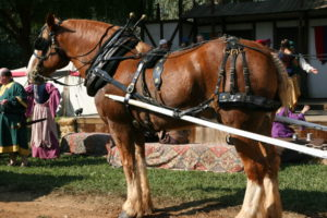 Horse in harness